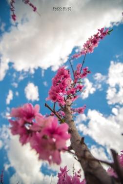 floracion-15