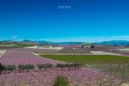 floracion-6