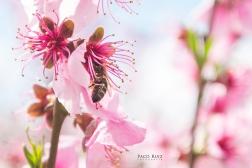floracion-8